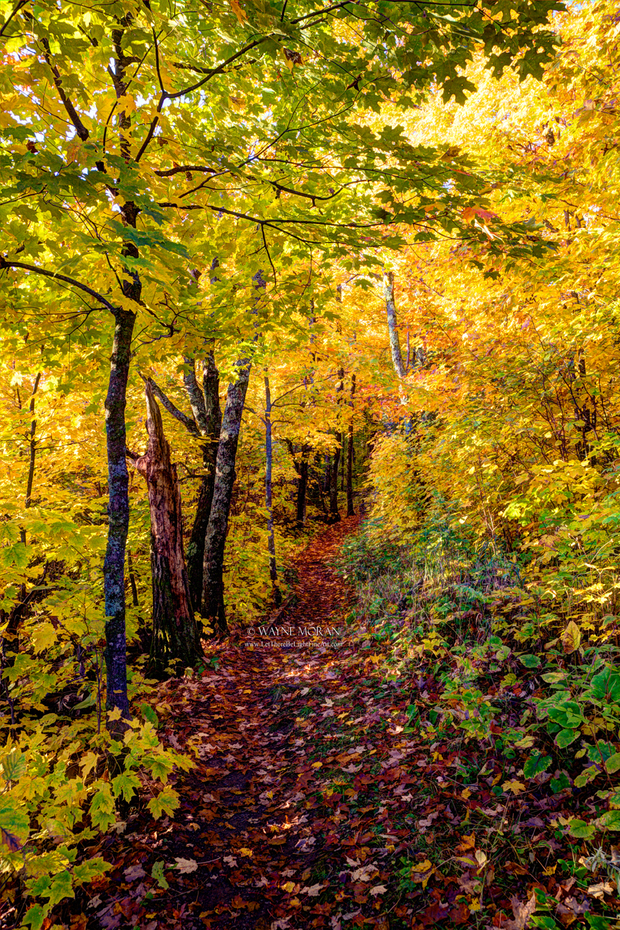The incredible colors of the Superior Hiking Trail Autumn Photography on the North Shore of Lake Superior Minnesota